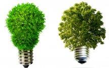 Светящиеся растения в скором будущем